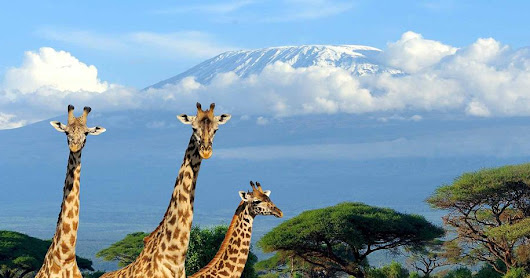 Flights to Kilimanjaro, travel tips and attractions. Great discount deals on flight fares, safaris and climbs