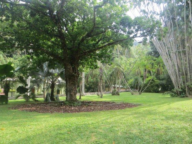 Большое дерево Малайзия
