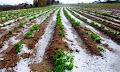 Ανυπολόγιστες οι ζημιές για τους αγρότες της Αιτωλοακαρνανίας