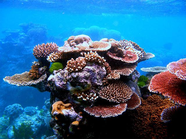 Corais registrados na Grande Barreira de Corais, na Austrália - Toby Hudson