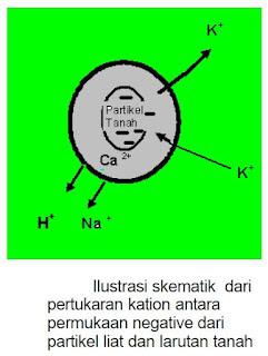 Profil Tanah dan Kimia Tanah