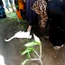 Cat shows up at man's funeral and refuses to leave the grave