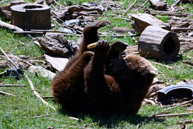 Velebitsko utočište za mlade medvjede Kuterevo