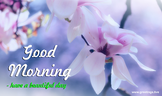 Morning Wishes images with magnolia Flowers
