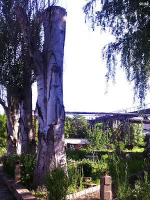Обновление деревьев