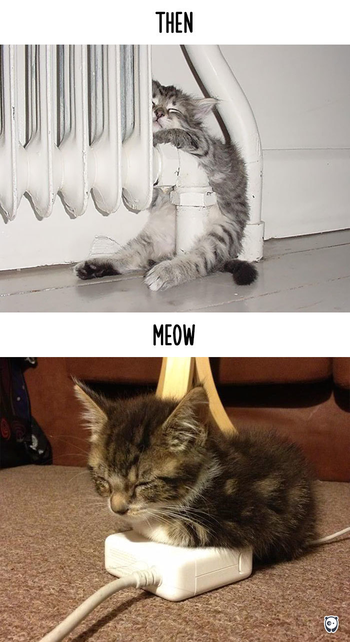 Then vs Meow How Technology Has Changed Cats' Lives (10+ Pics) - Getting Warm