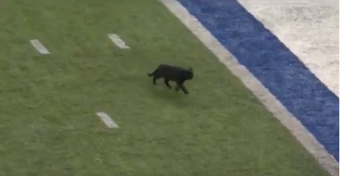 Black cat interrupts Cowboys-Giants game 11/4/2019