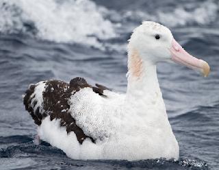 albatros amsterdam