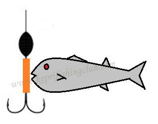 Rangkaian Mancing Ikan Belanak