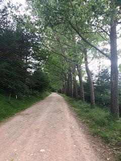 Passeig per pista forestal