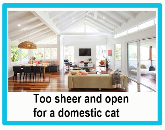 Open Plan Living Is Not Ideal for Domestic Cats