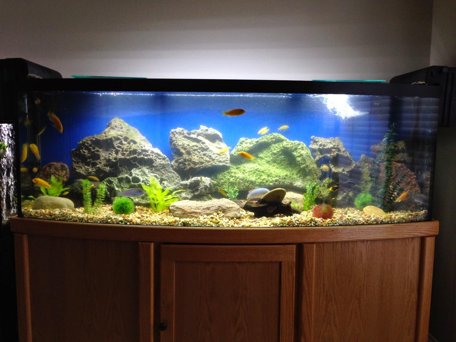 Brady's Aquarium