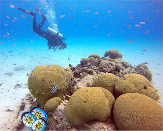 World class shore diving