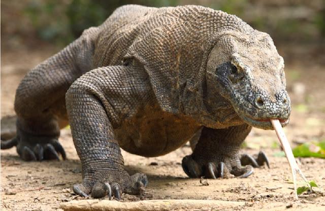 Lima Hewan Terancam Punah Di Indonesia Yang Takkan Kamu Lihat Di Negara Lain