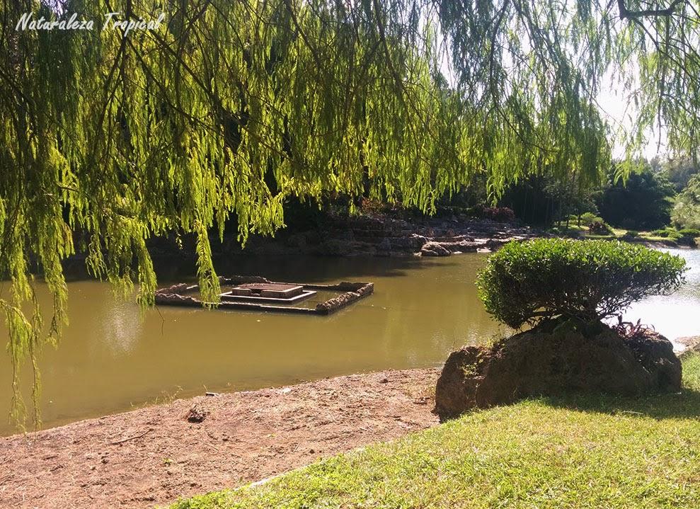 Bella foto del Jardín Japonés, Jardín Botánico Nacional de Cuba