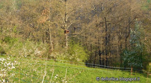 birdwatching fauna selvatica e bosco della fattoria didattica dell ortica Savigno Valsamoggia Bologna Zocca