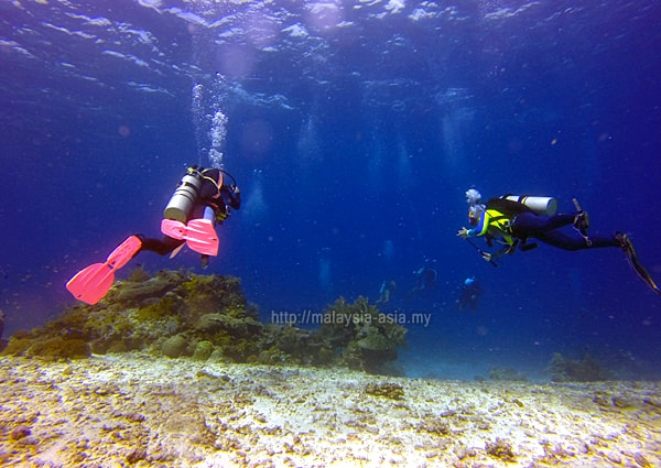 Divers at Alor Island