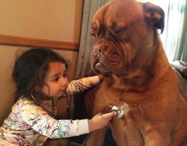 Điều trị chứng rối loạn nhịp tim cho chó