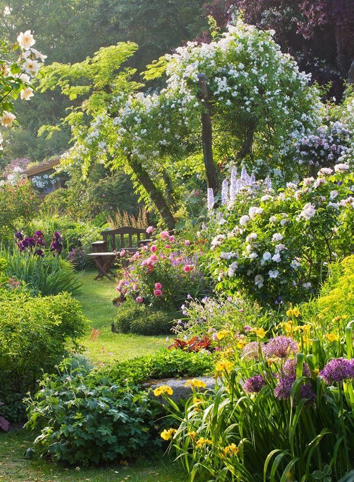 plante grimpante jardin anglais