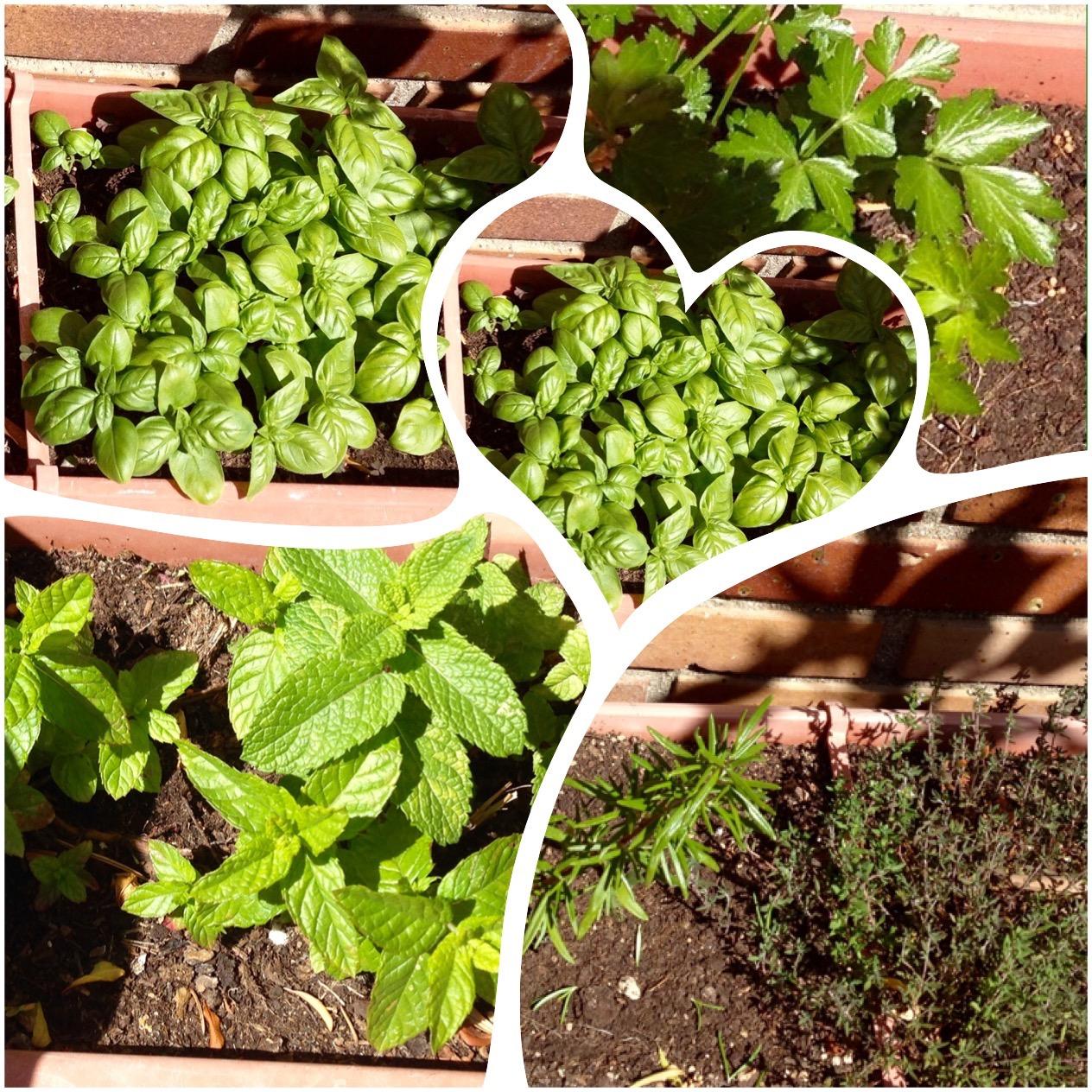 Amor por la cocina hierbas aromaticas siempre frescas for Plantas aromaticas para cocinar