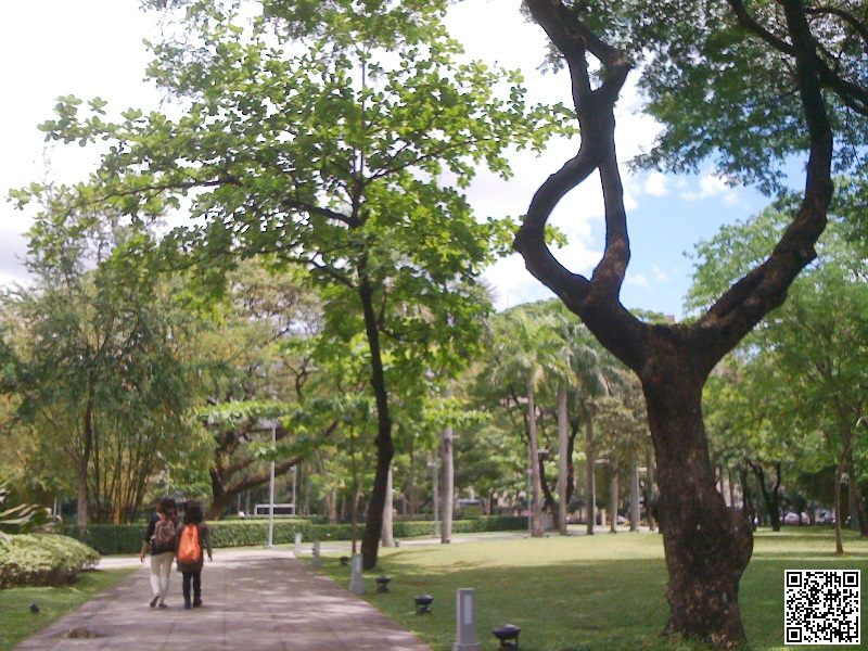 Make It Your City: A Quiet Saturday at along Paseo Street and Ayala Triangle Garden