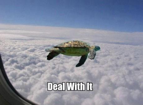 Turtle funny - photo#34