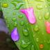 Hujan Warna Warni Terjadi di Negara Srilanka, Hujan Aneh yang Pernah Terjadi