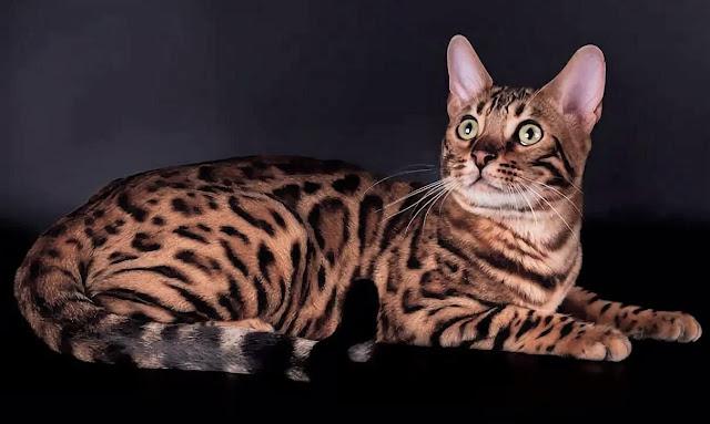 в Уфе ветеринары спасли кота