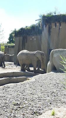 die neue Elefantenanlage im Zolli Basel