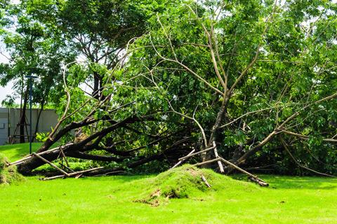Neighbors trees fell on my house in Alpharetta Georgia