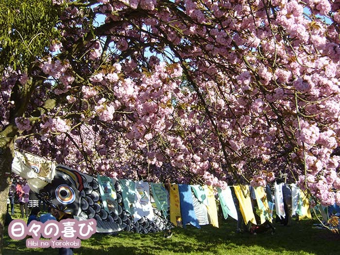 koinobori hanami parc de sceaux 2015