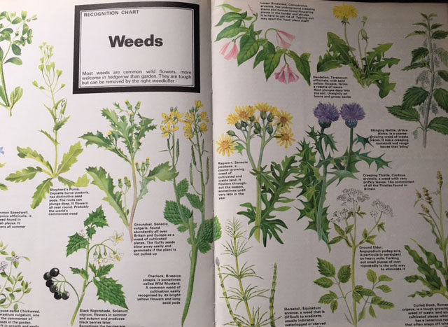 Vintage book weed drawings for indentification