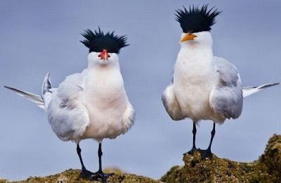 funny bird joke pictures