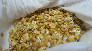 horsegram sprouts