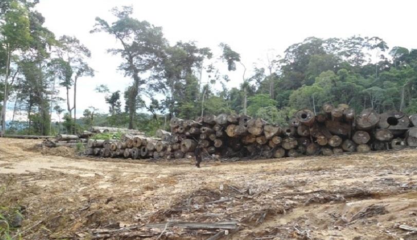 Mabes Polri Harus Selidiki Dugaan Perambahan Hutan PT. PA Mura