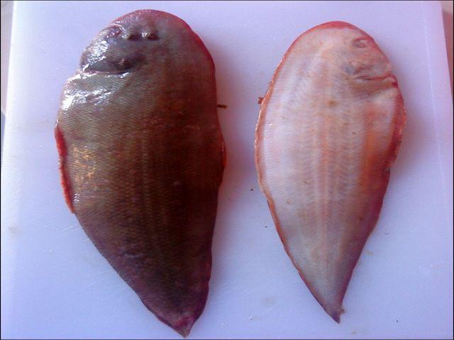 Gambar Insang Ikan