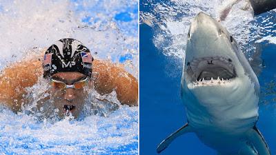 Michael Phelps vs. Great White Shark