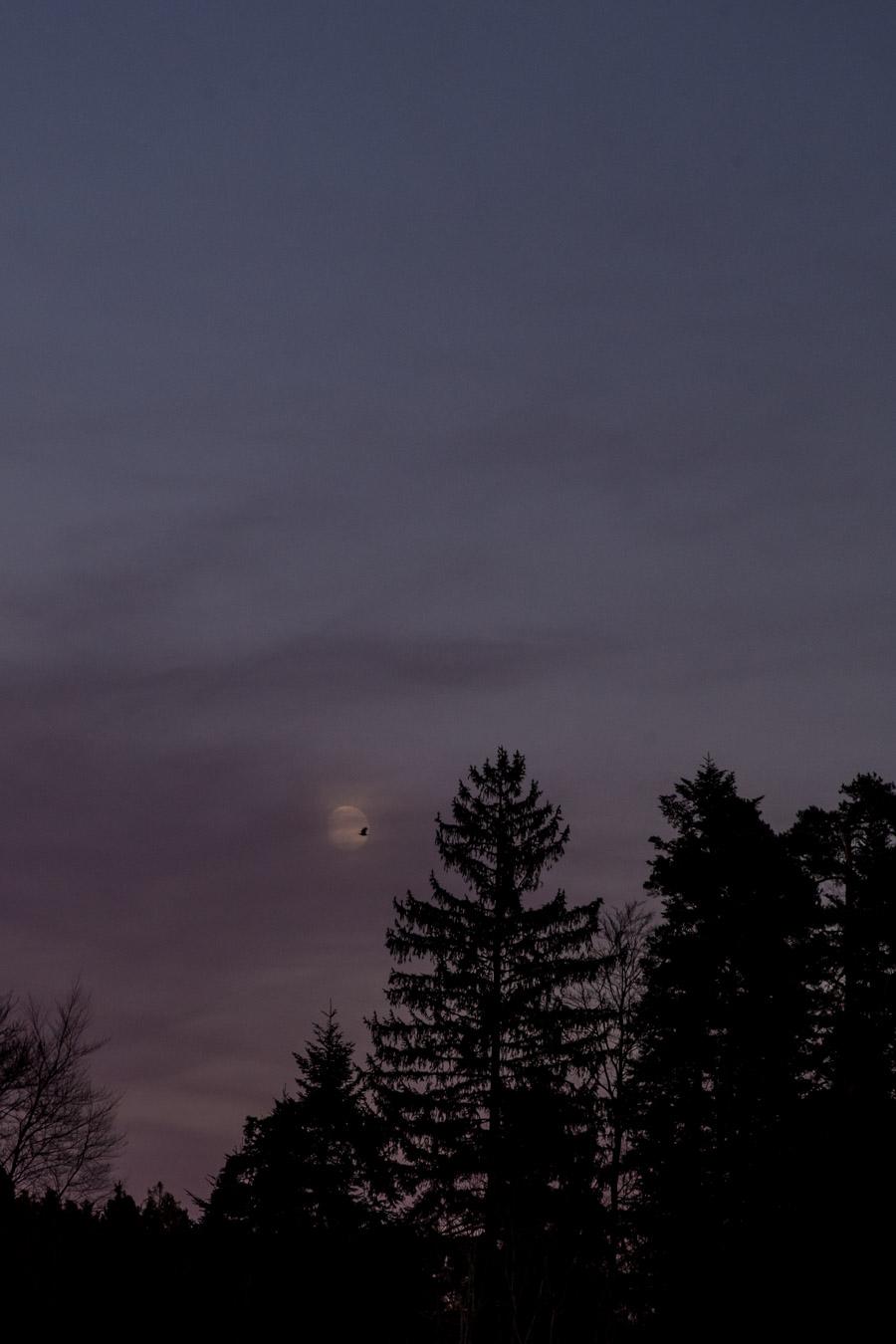 Rabe vor Mond