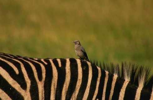 tick bird and rhinoceros relationship advice