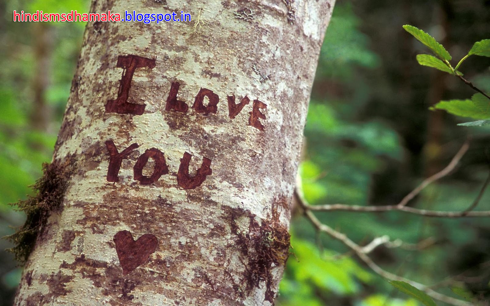 Nature Love Wallpaper Hd: I Love You On Tree Wallpapercute Quotes Happiness