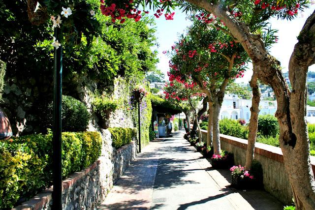 viale, isola di Capri, isola, Capri, alberi, vegetazione