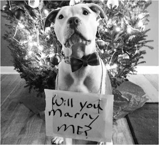 Dog Lover Valentine's Day Proposal Idea