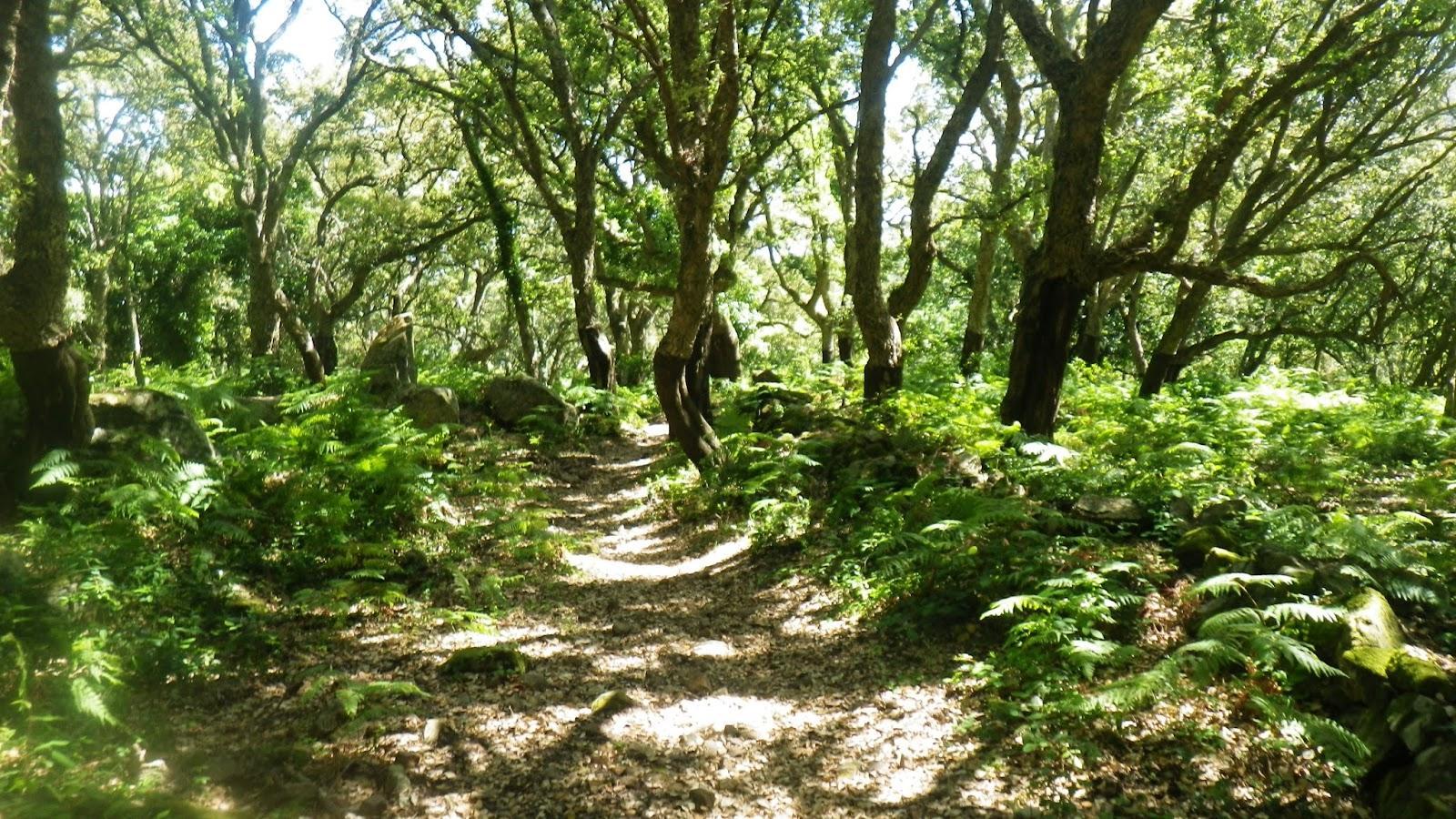Trail land en tierra de trail la ultima selva m s intensa m s selva - Mas goy fornells de la selva ...