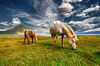 Chestnut and roan wild horses grazing in the wild