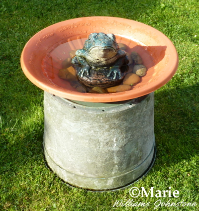 Frog design statue in the shallow bird bath
