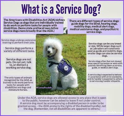 #servicedog #Infographic
