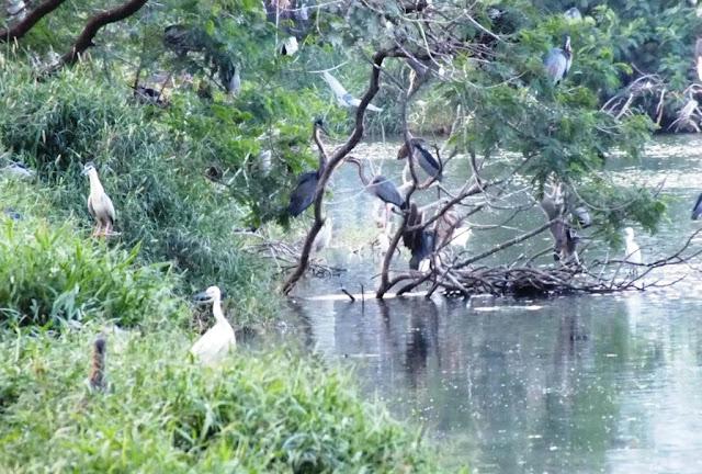 Kolam Bangau Cemara Asri