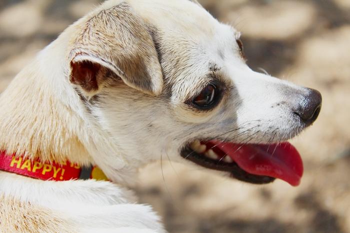 Dog Natural Appetite Stimulant