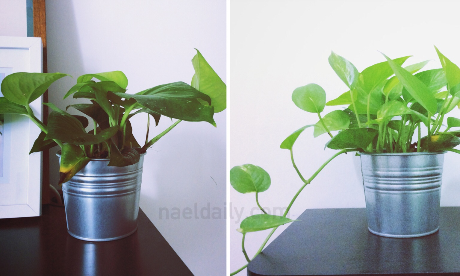 Money Plant Ikea Home Safe