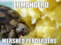 cute little hungry turtle eating mashed potatoes ERMAHGERD MERSHED PERDERDERS tiny tortoise meme